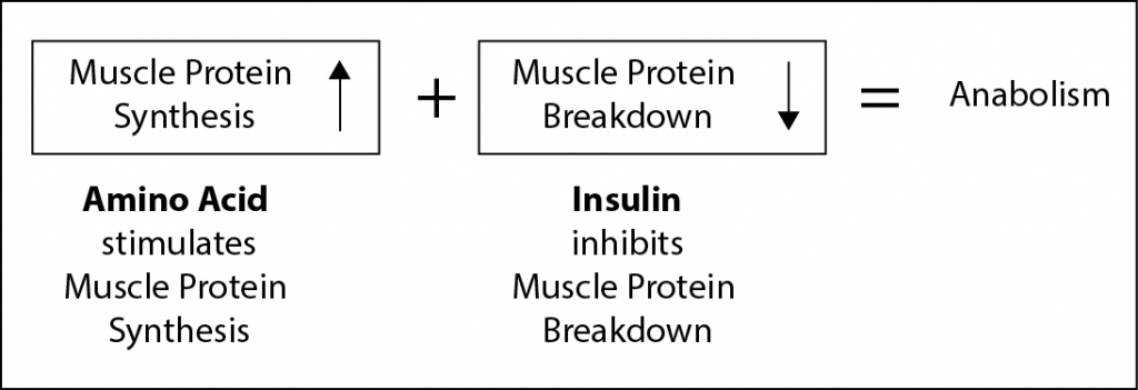Factors contributing to Muscle anabolism.